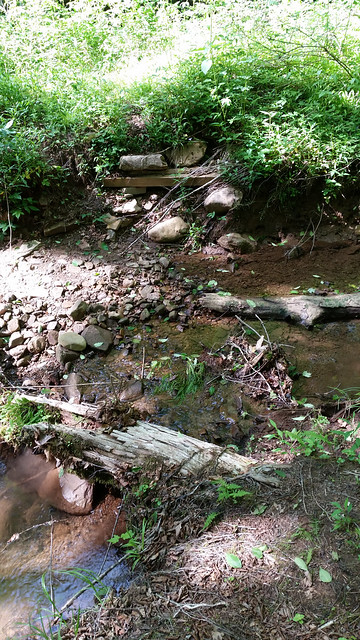 20170603_Tea_Creek_Wilderness_054