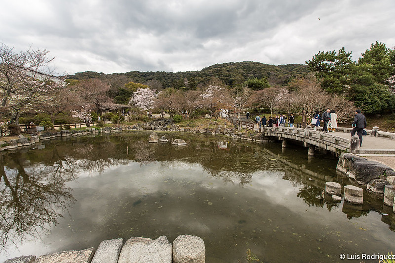 Maruyama-Park-Kioto-21