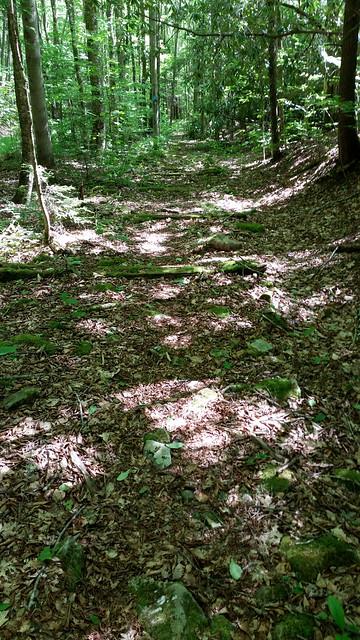 20170603_Tea_Creek_Wilderness_049