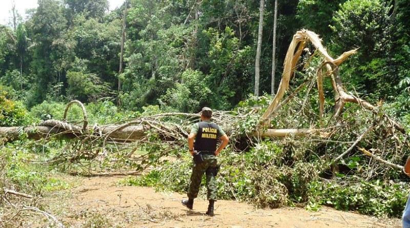 Criação de APA em Trairão abre caminho para mineração e desmatamento, Floresta nacional do Jamaxim, no PA