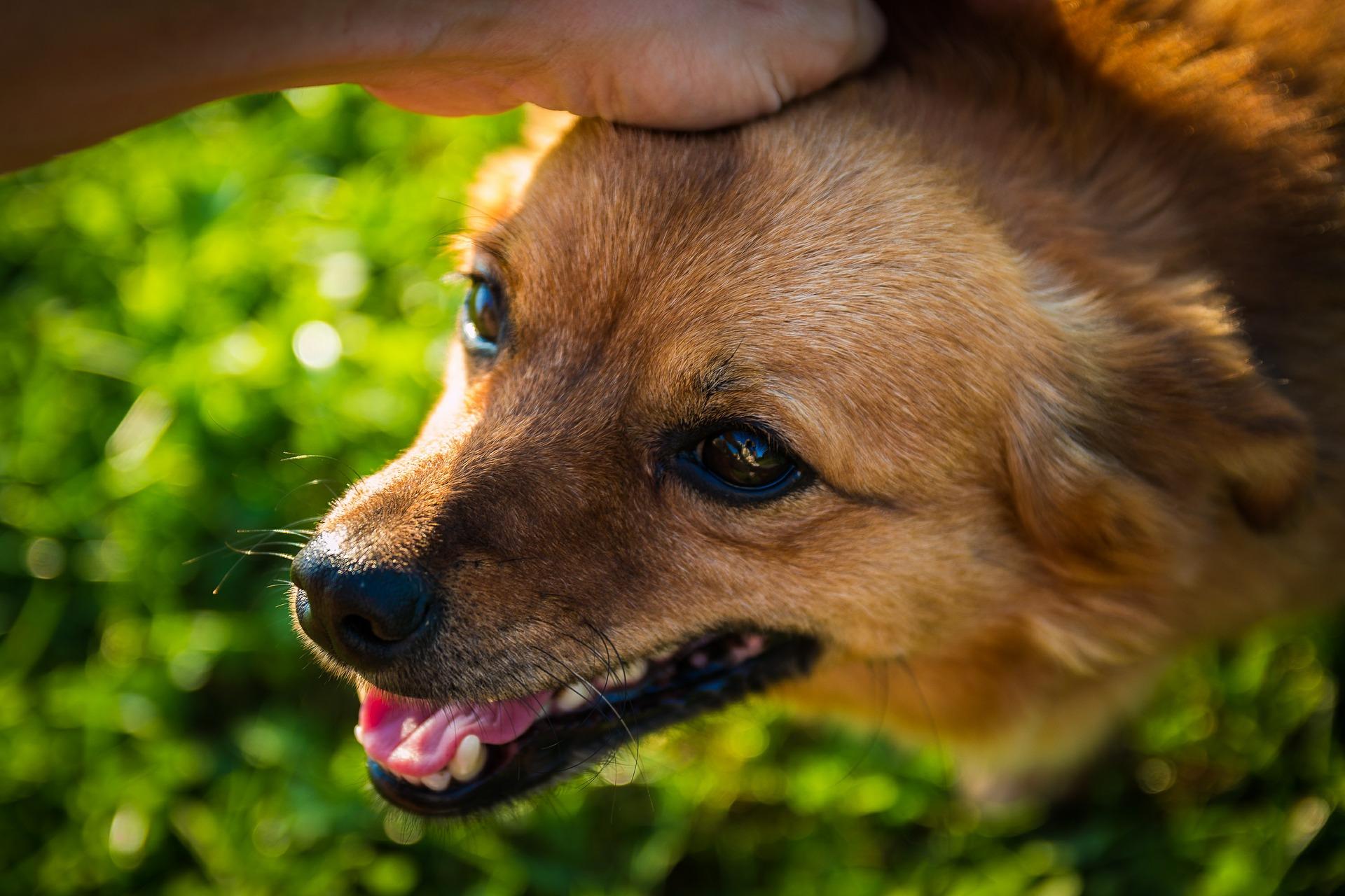 子犬が幸せな育て方を受けている犬