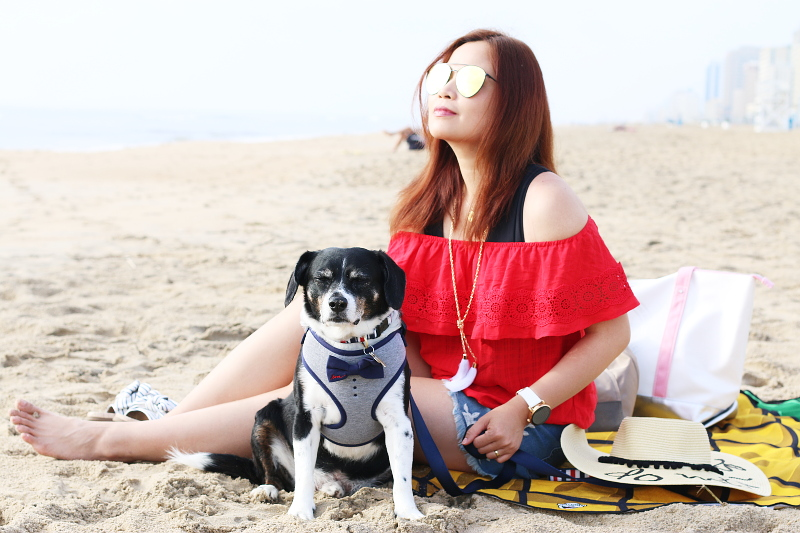bowtie-red-white-blue-dog-outfit-beach-9