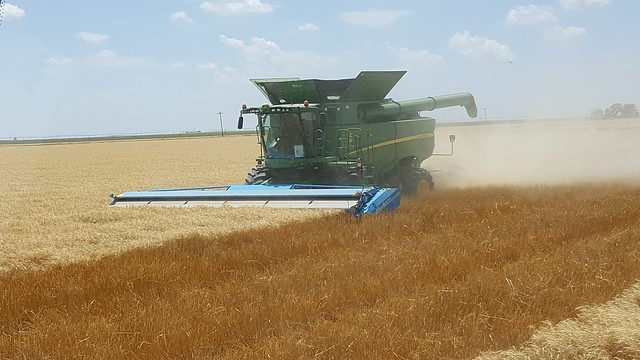 Schemper 2017 - Kansas Wheat Harvest