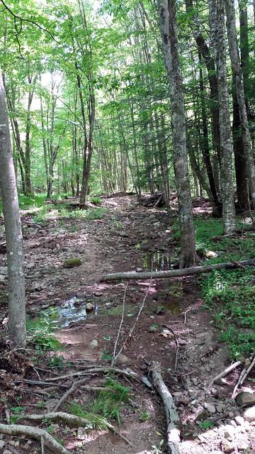 20170603_Tea_Creek_Wilderness_051