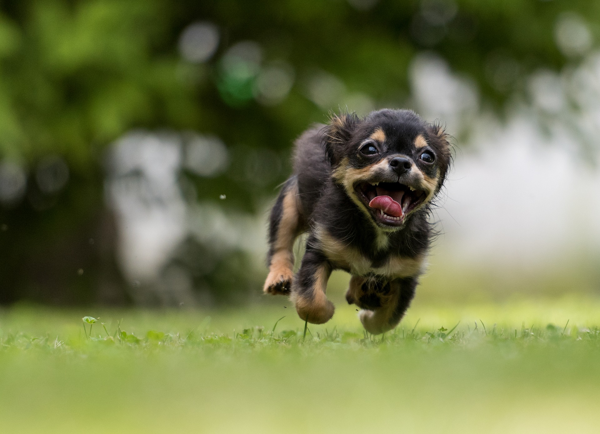 幸せな育て方をされて健康的な犬