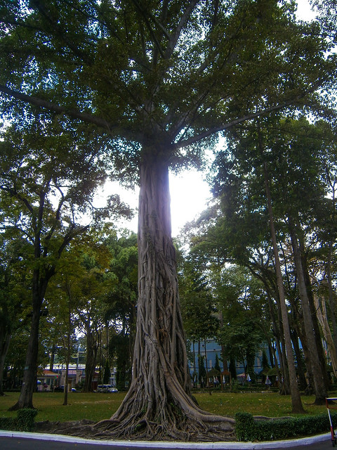 A Large Tree In The Surrounding Garden