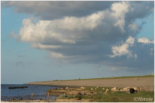Bewolking komt opzetten over de dijk terwijl de schapen rustig doorgaan met grazen.