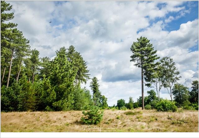 Open stukken in het bos; veroorzaakt door boskap. Wie zijn ogen open houdt kan leuke dingen zien, zoals een overvliegende zwarte ooievaar (EOS 5D mark IV + EF24-70L II @ 31mm | ISO100 | f/8 | 1/125 | Haida polarisatie filter)