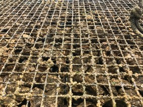 Photo of aquaculture cage