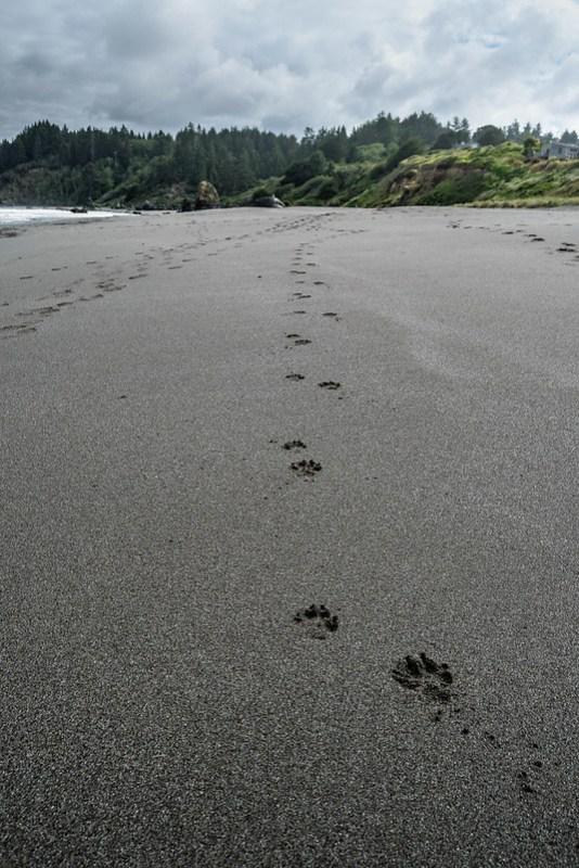Trinidad Beach - California - Huellas en la arena - paseo por la playa - naturaleza