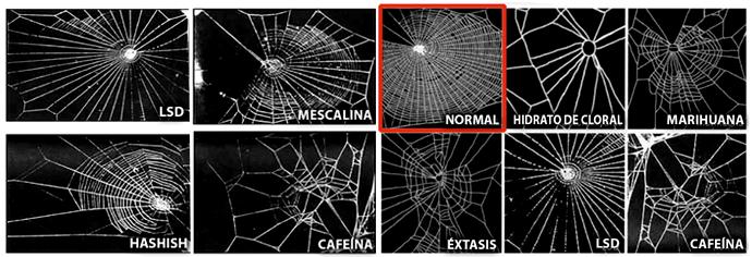 Efectos de las drogas en las arañas.
