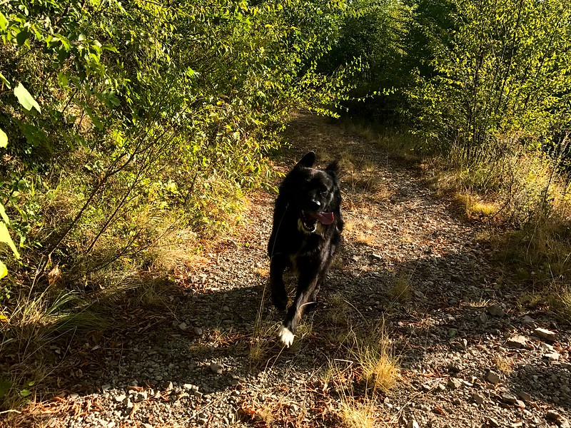 black dog running along trail with his tongue out in picentini mountains