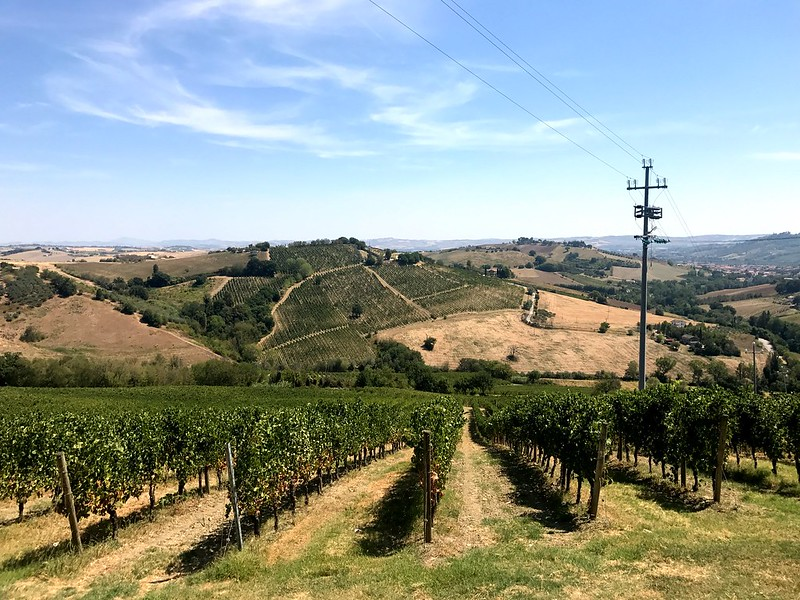 italy cycling trip - great view of vineyards on italian hills