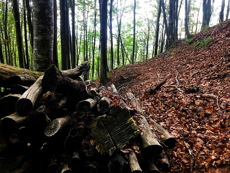 log pile in a beech forest in monti picentini in campagna