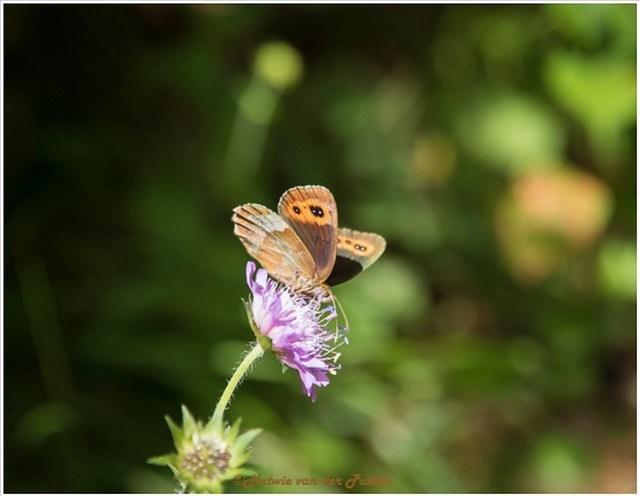 Onderweg genieten we nog van de vlindertjes langs het pad.