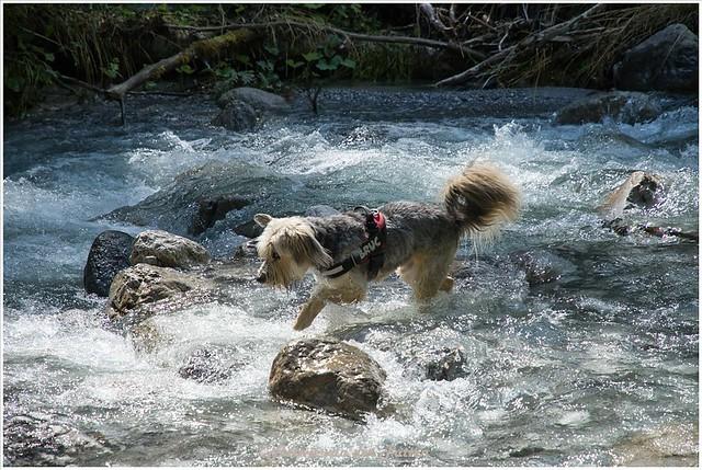 Bruc vermaakt zicht prima in het koude water.
