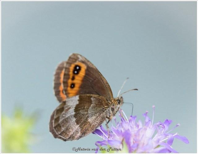Op deze zonnige dag zijn veel vlinders te zien.