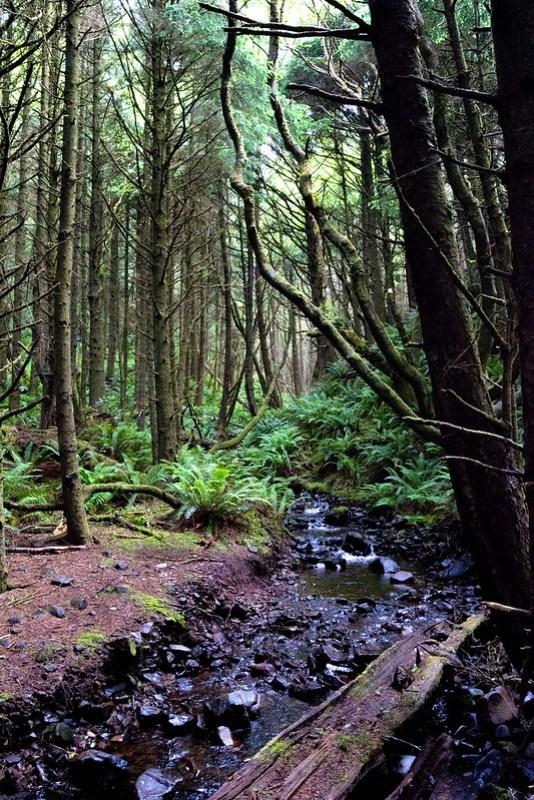 Ecola State Park - Clatsop Loop Trail - Costa del Pacífico en Oregon