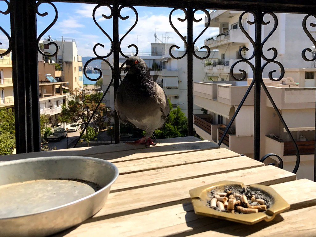 pigeon in front of full ashtray on a table in a balcony