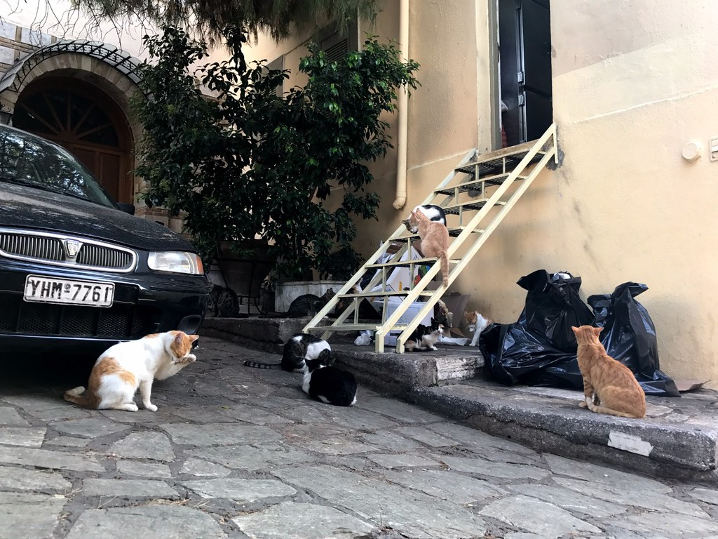 cats searching trash bags in athens streets