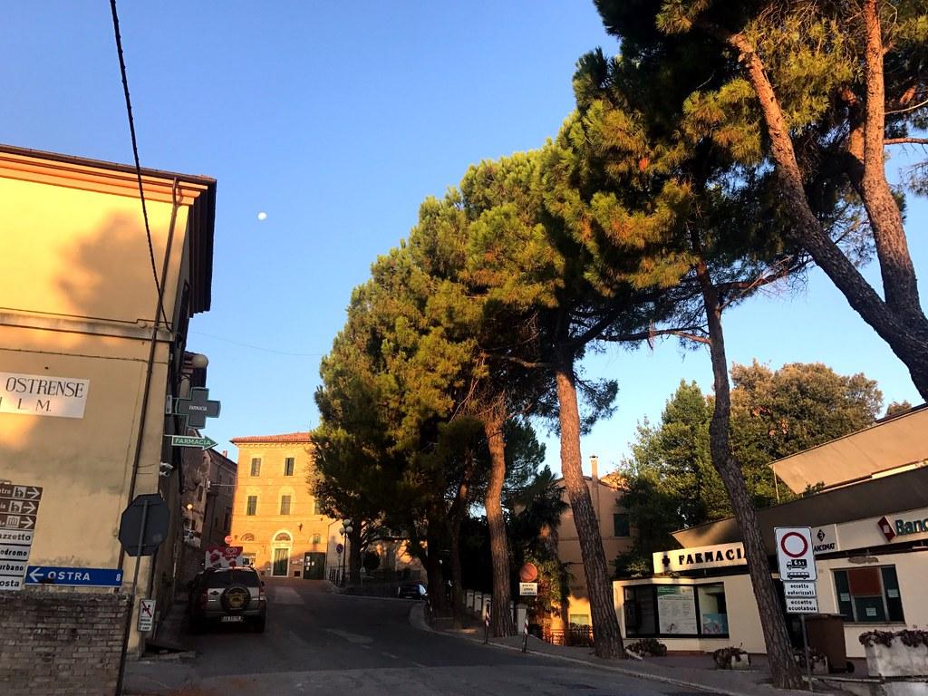 pine trees along street in italian village belvedere ostrense