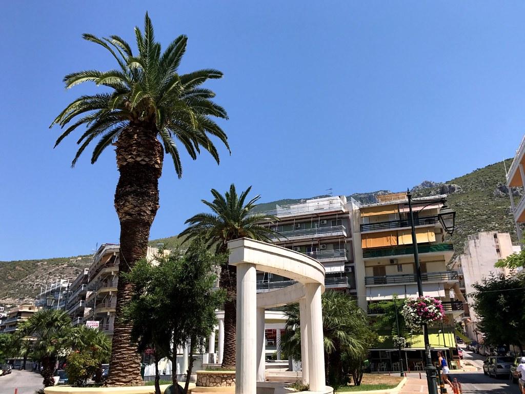 palm tree in loutraki greece