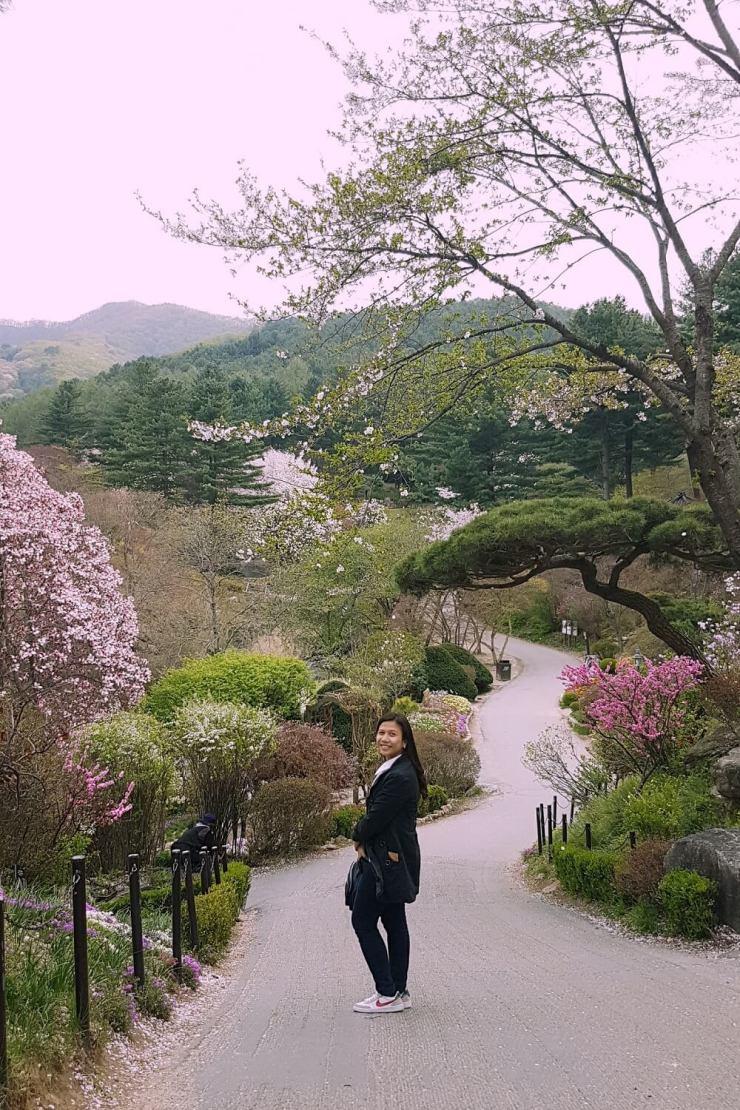 spring in the garden of morning calm
