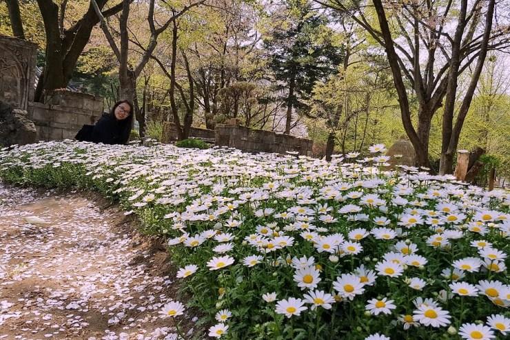 nami island in spring