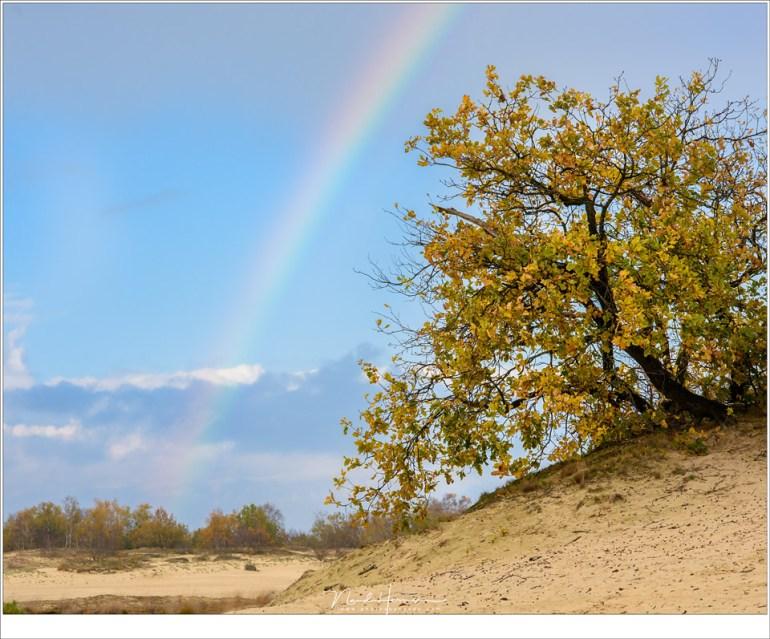 Het mooiste is als de boog van een regenboog ook in de compositie past, samen met elementen uit het landschap. (Nikon D810 + 85mm | ISO160 | f/11 | 1/100)