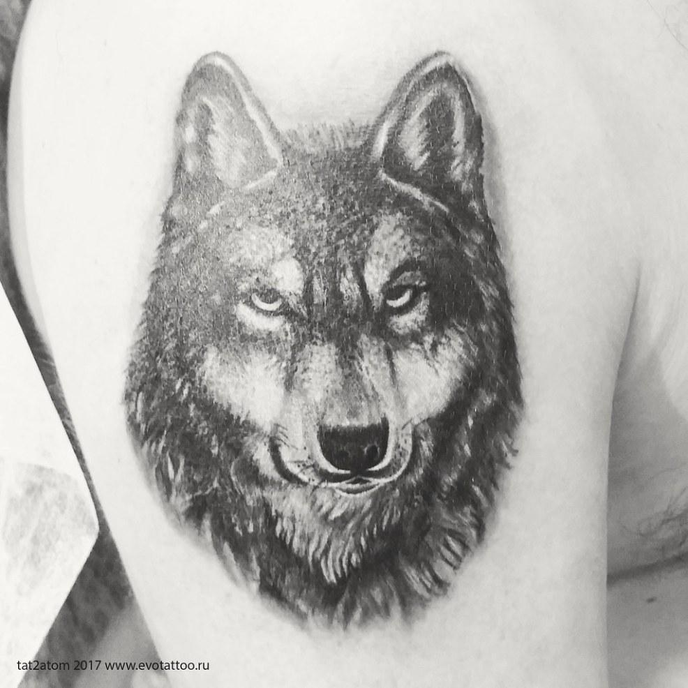 фото тату волк на плече