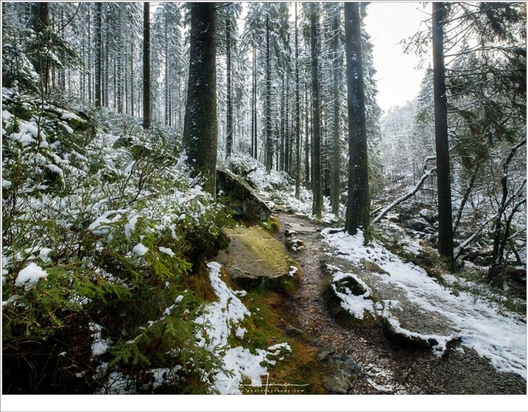 Het avontuurlijke wandelpad stroomafwaarts langs de Hoëgne