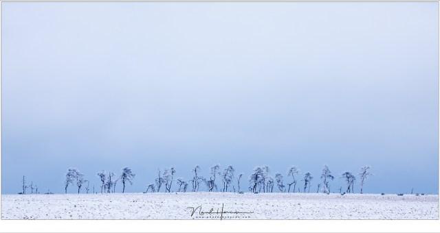 Daar staan ze, aan de horizon: de skeletbomen van Noir Flohay; het doel van menig fotograaf