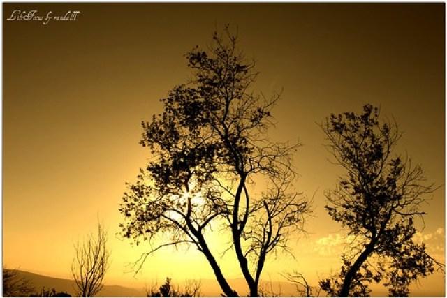 dry trees silhouette