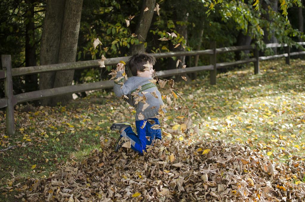 short story fall leaves 5