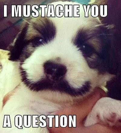 I Mustache You A Question Dog Meme Onfbme14A8HEr