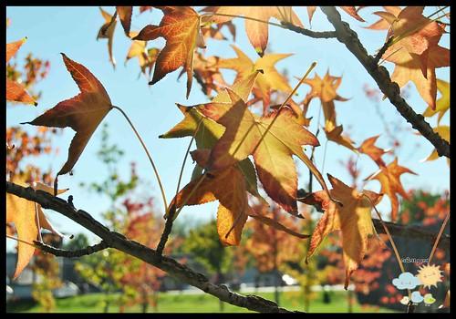 Contras y pros del otoño