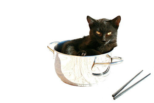 Food Restaurants Using Cats