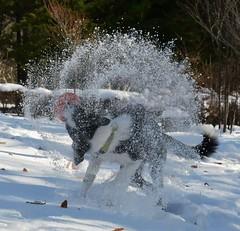 今季初、雪遊び(^^;