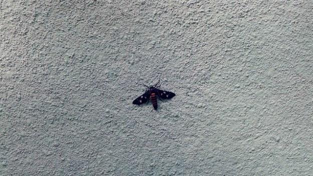 Bug In Sri Lanka