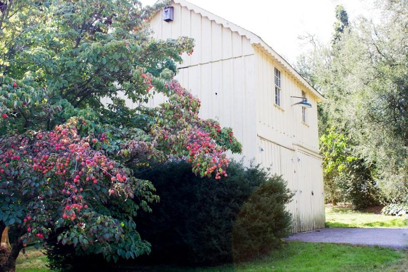 tyler-arboretum-shed-berries