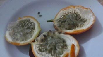 Bali Passionfruit