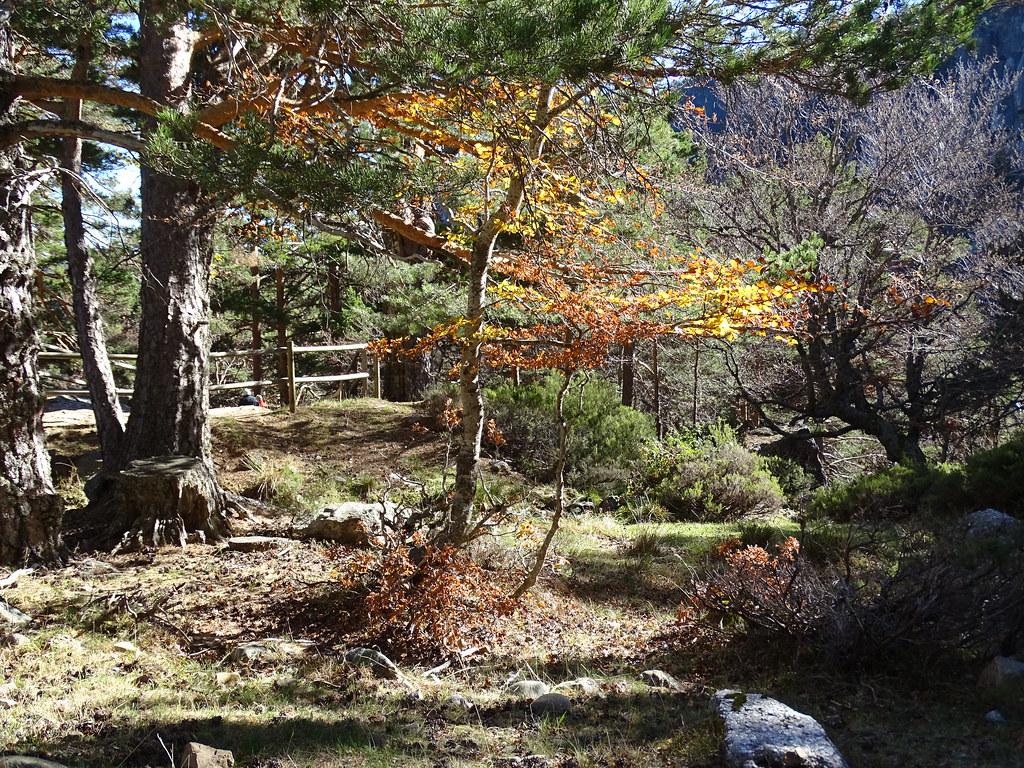 Parque Natural Sierra Urbión Soria 10