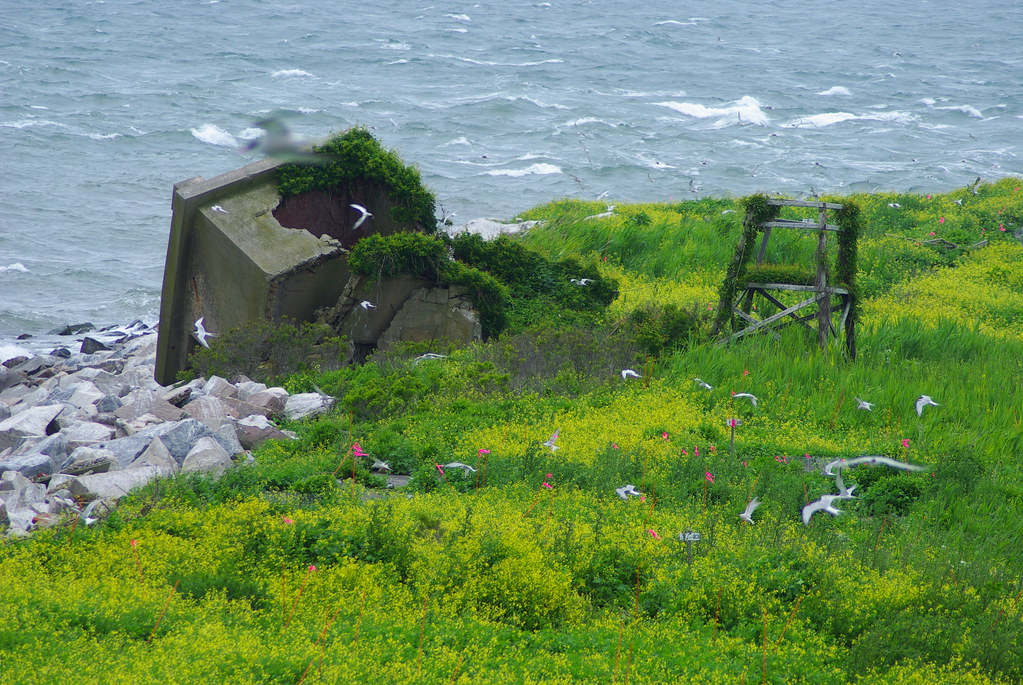 Great Gull Island NY Nests Are Marked After A Chick
