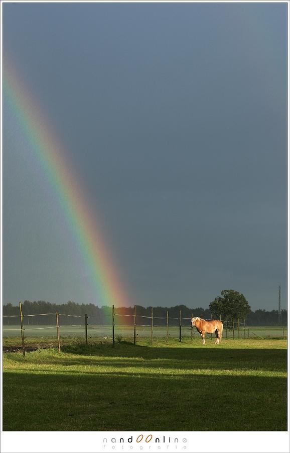 Legende vertelt dat er op de plek waar de regenboog de grond raakt een pot met goud gevonden kan worden. Maar valt het niet op, dat als je naar een regenboog loopt die altijd met je mee beweegt. Toch kan de regenboog soms op armlengte afstand te zien zijn, maar je kunt 'm nooit aanraken. (Canon EOS 1D3 + EF85L | ISO200 | f/10 | 1/60sec