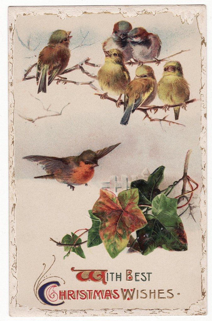 Vintage Christmas Postcard With Sweet Birds Carol Anne