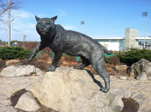 Image result for unh wildcat