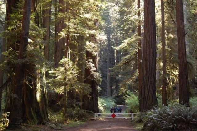 Reserva en el Redwood National Park