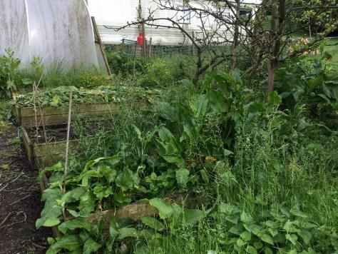 Farm 3.6