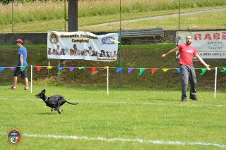 Skyhounds Classic European Championships a Piverone
