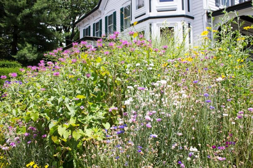 unionville-wildflowers